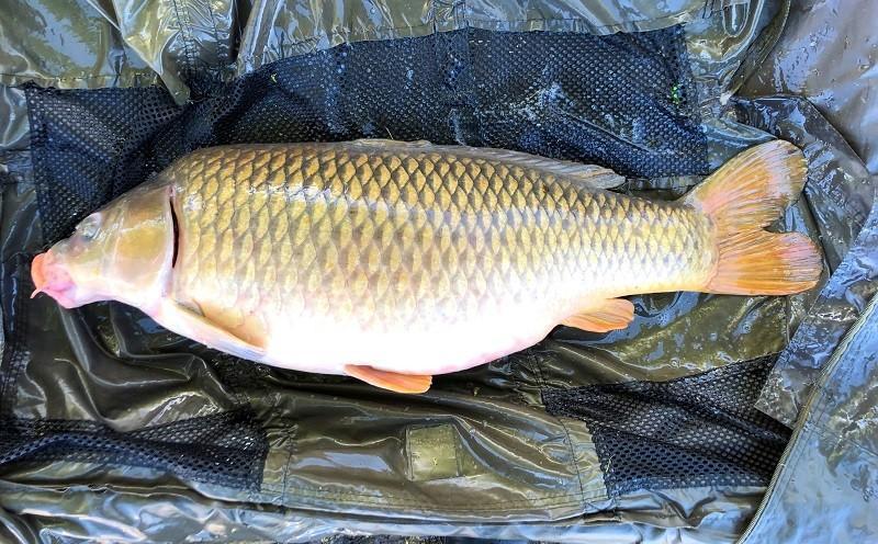 twee uur vissen op karper, de tweede vis